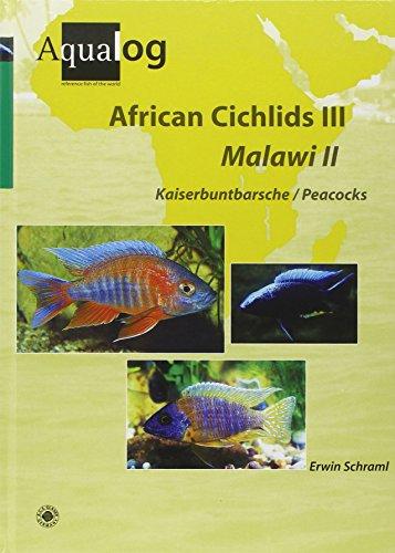 African Cichlids III /Malawi II: Kaiserbuntbarsche /Peacocks