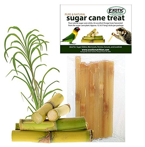 Exotic Nutrition Sugar Cane Sticks (20 Sticks) - Healthy Natural Sweet Sugar Treat - Made with Real Sugar Cane - Sugar Gliders, Squirrels, Marmosets, Monkeys, Parrots, Birds & Other Small Pets