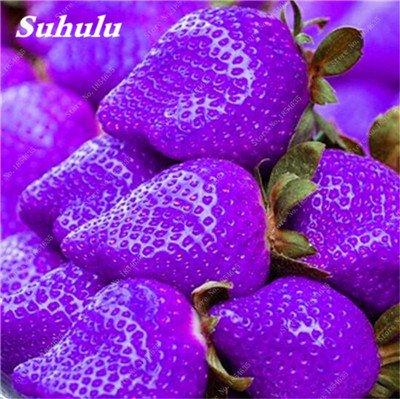 Big Promotion! 1000 Pcs Four Seasons en pot Graines Strawberry Super Sweet Seeds fruits Bonsai plantes Semences Maison et Jardin 11