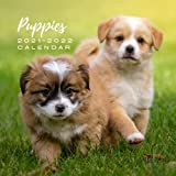"""Puppies 2021 - 2022 Calendar: July 2021 to December 2022   Photo Mini Calendar 2021/2022   8.5"""" x 8.5""""   Month to View   18 Months Photo Calendar ... Present for Colleague Coworker Manager Friend"""