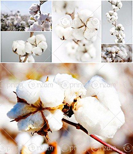 20pcs / sac en coton blanc Gossypium cultures de semences Graines de coton, graines de coton graines bricolage jardin des plantes