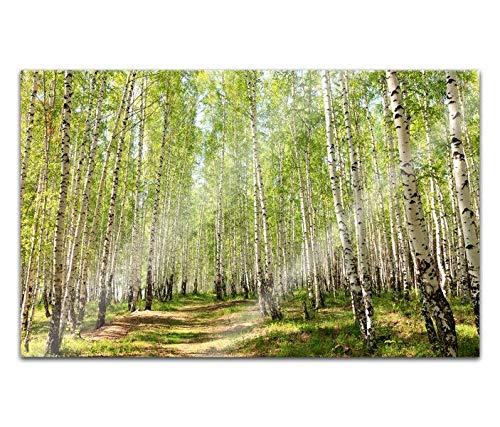 Acrylglasbilder 80x50cm Birkenwald Birke Wald Baum Landschaft Bäume Weg Acryl Bilder Acrylbild Acrylglas Wand Bild 14H076