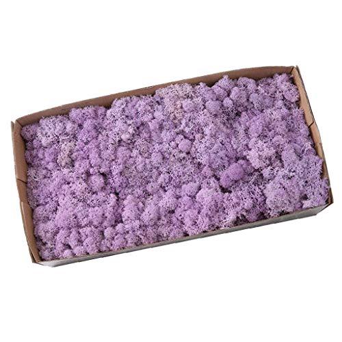 PETSOLA Musgo De Reno Preservado Natural para Terrarios Jardines De Hadas Artesanía Artesanía Forro Artesanía Arreglo De Flores DIY - Púrpura