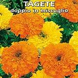 TAGETE (Tagetes erecta) doppio in miscuglio - SEMI