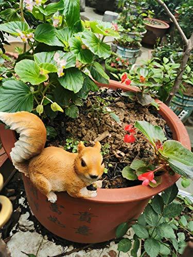 DoMyFit - Statua da giardino a forma di scoiattolo, ideale per esterni, decorazione di animali