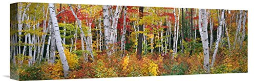 Global Gallery Julia Purinton Resolutions Fall Giclee Stretched Canvas Artwork 24 x 12