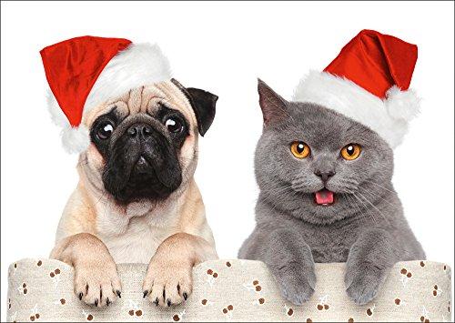 10 cartoline di Natale divertenti con cane e gatto di Edition Colibri (10642)