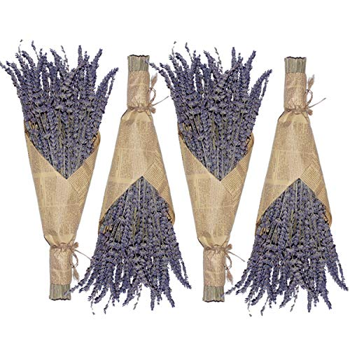 Cedar Space Lavender Dried Flowers 4 Bunches Dried Lavender Ideal Home Fragrance Products for Home Decorations, Wedding, Party, Photography & Flower Arrangements, Total Length 16 Inches