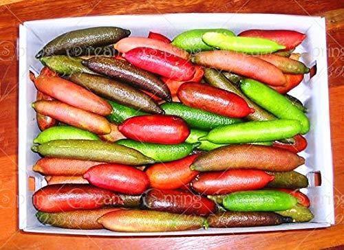 SANHOC 50Pcs / Sac de Fruits tropicaux Plantes Doigt Limes Agrumes Grenade pour Jardin Balcon Plantes rares Plantes Bonsai Arbres fruitiers: 9