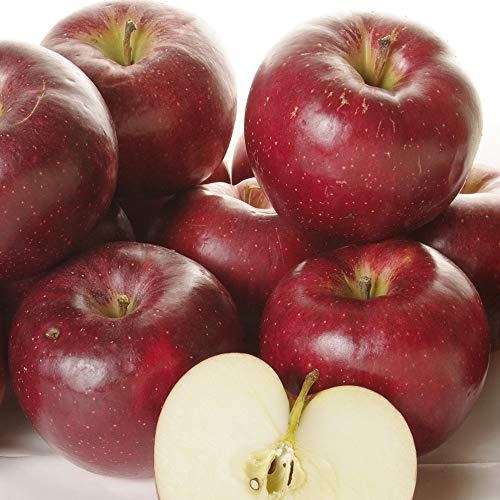 りんご 大特価 青森産 大紅栄 だいこうえい 10kg 1箱 ご家庭用