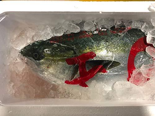 ぶり (養殖)1本 約4kg~5kg【脂あります・刺身用】刺身・しゃぶしゃぶ・寿司・煮付・照焼などでお使いいただけます。