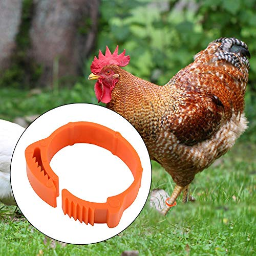 100PCS Anelli per zampe di pollame, Fibbia per zampe di pollame in plastica Anello con fibbia per etichetta digitale, Polli Anatre Anelli per zampe d'oca Anelli Clip di identificazione per pollame