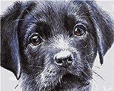 Par numéro Kit pour adultes adolescents débutant Tête de chien noir dessin avec des pinceaux peinture 40 * 50 CM Cadeau de noel