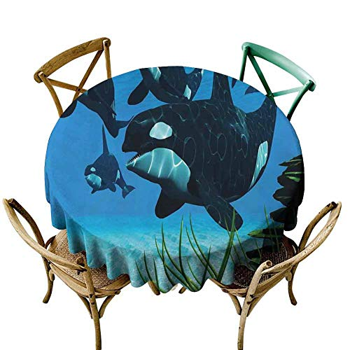 Table Cover Whale,Pod of Killer Whales Swim Along a Reef Looking for Fish Prey Ocean Picture Print,Sky Blue Green Diameter 50