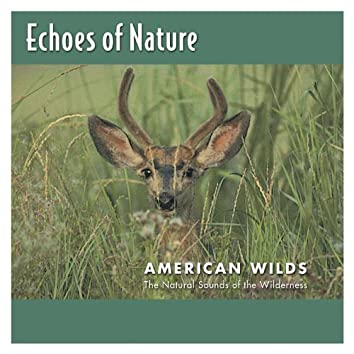 American Wilds
