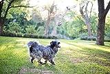 Hundespielzeug – 2er Set – Interaktiv – Baumwollknoten – Schöne Geschenkbox – The Natural Pet Company Qualitätsprodukt - 4