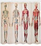 ABAKUHAUS Jahrgang Duschvorhang, Anatomie menschlicher Körper, mit 12 Ringe Set Wasserdicht Stielvoll Modern Farbfest & Schimmel Resistent, 175x180 cm, Creme Rubin
