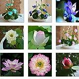 Conjunto de plantas flotantes 50 piezas para un estanque o acuario
