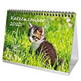 Katzenzauber DIN A5 Tischkalender 2020 Katzen und Katzenbabys Geschenk-Set: Zusätzlich 1 Gruß- und 1 Weihnachtskarte - Seelenzauber