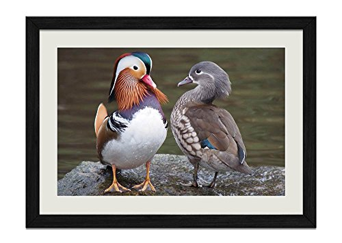 CU.RONG Pair of Mandarin Ducks Wood Frame Poster Home Art Deco Picture Print Framed Painting(12x16 in Black Frame)