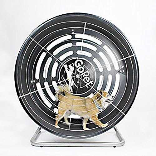 Best Small dog exercise wheel