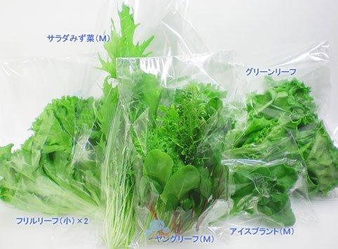 【送料無料】お得な サラダセットM リーフレタス ベビーリーフ 洗わずに食べられる 無農薬 安心安全 美味しい クリーン 工場野菜 超新鮮