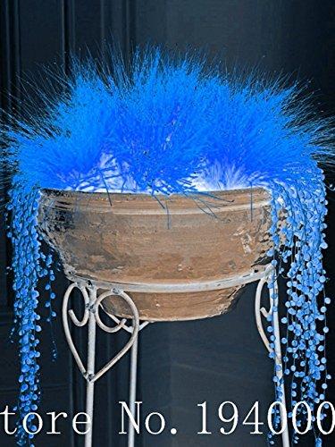 NOUVELLE ARRIVEE!!! 200 pcs / sac 6 couleurs mexicaines graines de graminées décoratives bonsaï en pot plante décoration bricolage pour la maison et le jardin