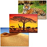 GREAT ART 3er Set XXL Poster – Afrika – Savanna