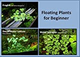 Acquario galleggiante piante pacchetto, 12Amazon Frogbit, 12Dwarf Water lattuga, 12acqua paillettes