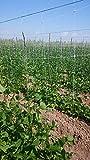 Rete 50 metri per ortaggi rampicanti lunghezza - 1,7 metri altezza - quadrato 10/15 cm circa agricoltura (50 metri) orto piselli canapa majuriana pomodori fagioli fagiolini cetrioli peperoni