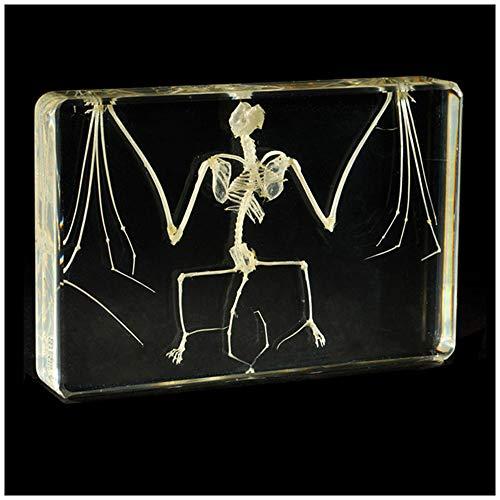 Modell eines Fledermaus-Skeletts - Modell eines Fledermaus-Skeletts mit natürlichem Knochen - kreatives Harzhandwerk Tierisches Skelett-Einbettungsmuster -Modell für den Unterricht in Veterinärmedizin