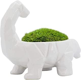GeLive Dinosaur Planter, Cartoon Ceramic Succulent Plant Pot, Fun Animal Planter, Flower Container, Window Box, Home Decor Vase, Desktop Decorative Organizer (White No Hole)