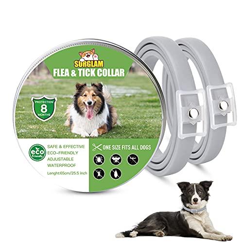 Collare Antipulci e Zecche per Cani, Collare Regolabile Impermeabile, 8 Mesi di Protezione, Soluzione Naturale Contro i parassiti per Cani, Taglia Unica per Tutti