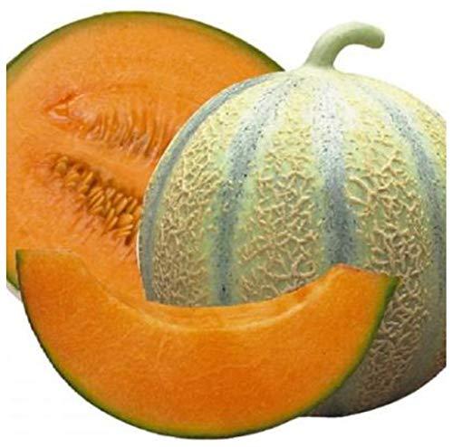 Premier Seeds Direct MEL05 migliori semi di melone cantalupo di charentais (confezione da 100)