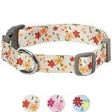 Umi. by Amazon - Made Well Collier réglable pour chien, taille S, tour de cou 30 à 40 cm, Motif floral, Ivoire