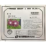 福花園種苗 朝顔 『団十郎』 種子10粒詰 花色(えび茶) 500906