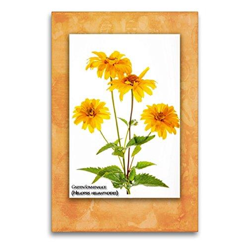 CALVENDO Premium Textil-Leinwand 60 x 90 cm Hoch-Format Garten-Sonnenauge (Heliopsis helianthoides), Leinwanddruck von Georg Hanf