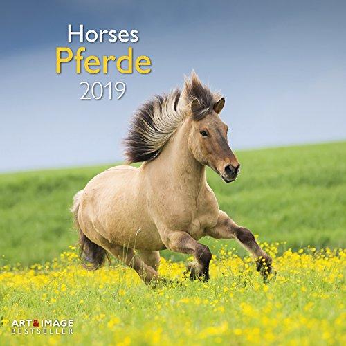 Pferde 2019: Broschürenkalender Art&Image