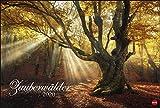 Zauberwälder Edition. Wandkalender 2020. Monatskalendarium. Spiralbindung. Format 58 x 39 cm