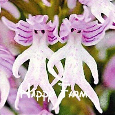 .100pcs Bello rostro del mono orquídeas semillas de variedades múltiples Bonsai plantas Semillas para el hogar y el jardín