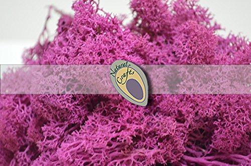 Deep Pink Natural Reindeer Moss 100g