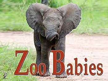 German Zoo