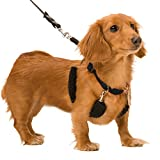 SPORN Dog Halter, Black, Small