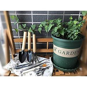 Bonsai Tree Growing Kit Succulent Gardening Tools Set of 8 pcs - Include Pruner, Fold Scissors, Mini Rake, Bud, Cleaning Brush & Leaf Trimmer (8pcs)