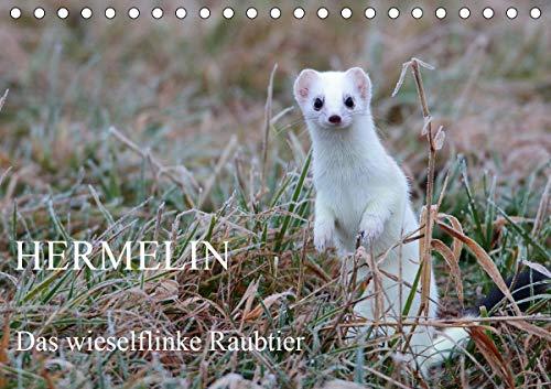 Hermelin - das wieselflinke Raubtier (Tischkalender 2021 DIN A5 quer)