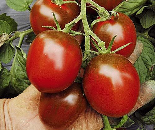 Bobby-Seeds BIO-Tomatensamen Paul Robson Portion