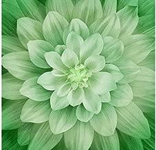 Dream Big - Leaf - Digital Panel -Large Floral -by Hoffman Fabrics