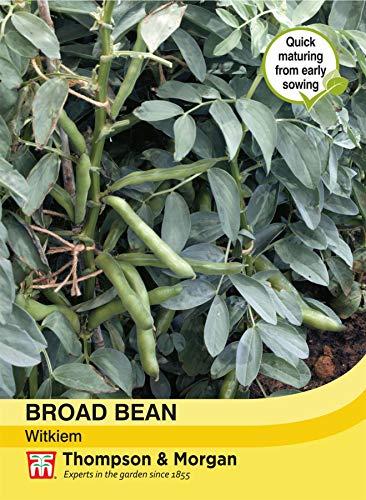 Thompson & Morgan Gemuse Broad Bean Witkiem 30 Samen