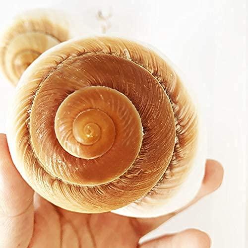 apple snail shell health
