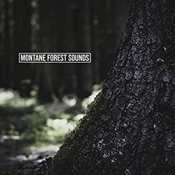 Montane Forest Sounds
